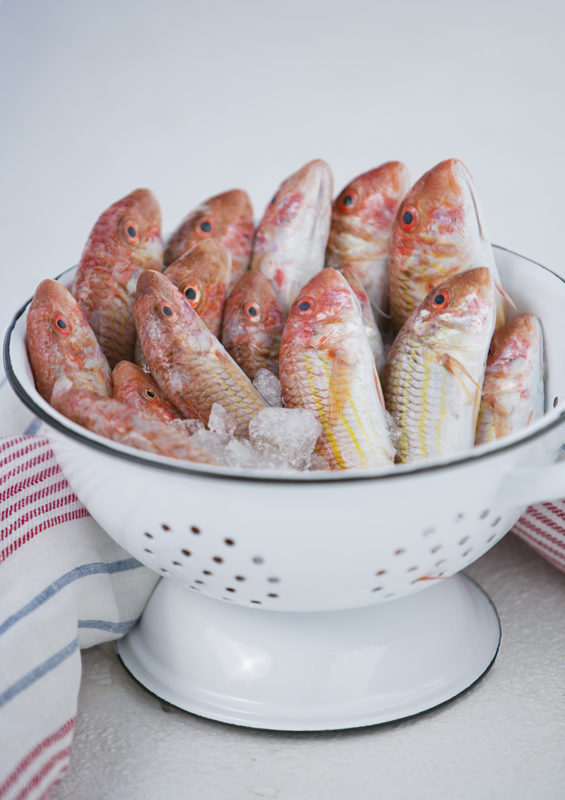 Barbounia - Red Mullet